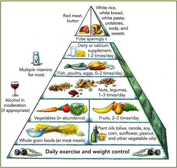 Harvard Food Pyramid on rice university worksheets for science