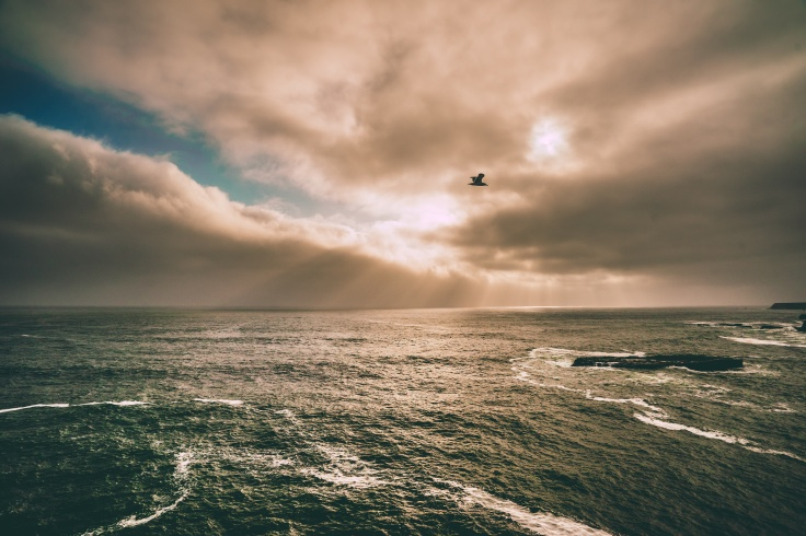 Bird flying over water from Unsplash